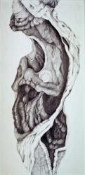 Olivenbaum, Detail